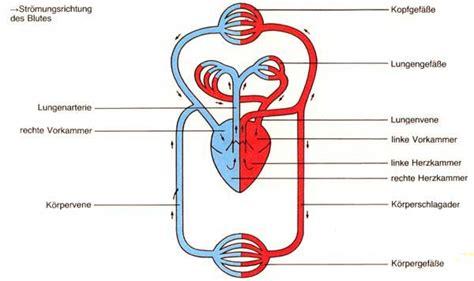 Beschriftung Lunge by Atmung Und Kreislauf