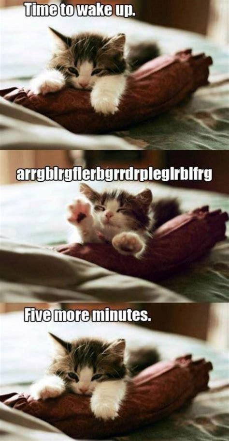 Cute Funny Cat Memes - cute cat meme