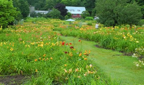 daylily exhibitions 2018 books home page www daylilygarden
