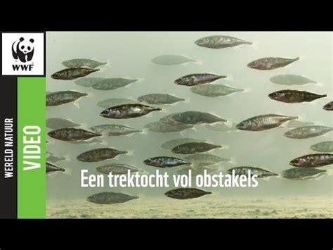 walvis weken scheepvaartmuseum 50 best natuur in nederland images on pinterest dutch