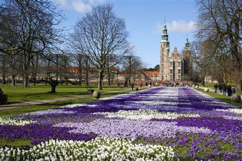 giardini in fiore foto foto i giardini in fiore a copenaghen
