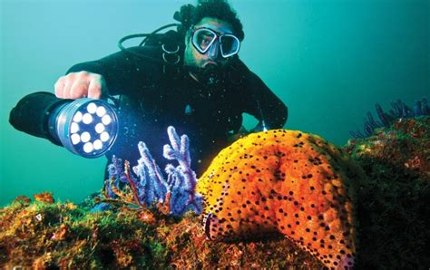 dive oman where to go scubadiving in oman dubai day trips what s on