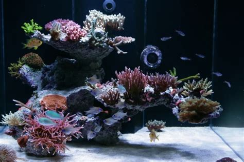 Saltwater Aquarium Aquascape by 72 Gallon Bow Front Sps Reef