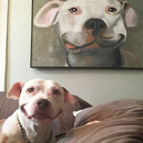 can dogs smile stray pit bull can t stop smiling after he was rescued from 187 relaxing