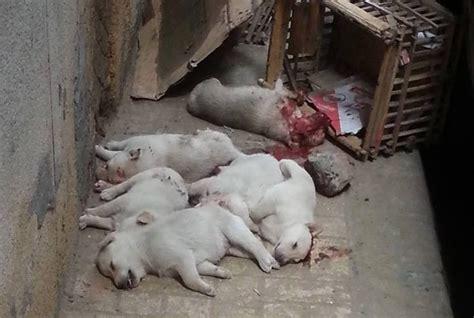 newborn puppies newborn puppies brutally massacred in alexandria streets
