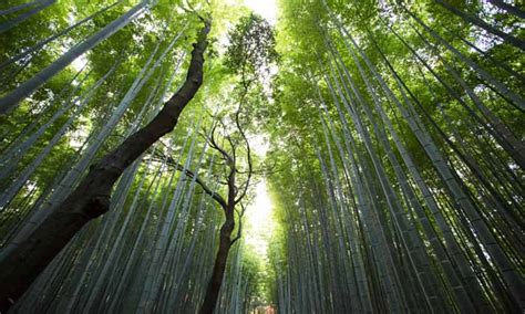 Imagenes Inspiradoras De La Naturaleza | 50 frases de la naturaleza realmente inspiradoras