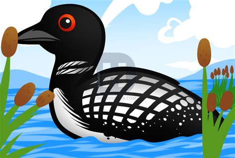 How To Draw A Loon, Loon Bird, Step by Step, Drawing Guide ...