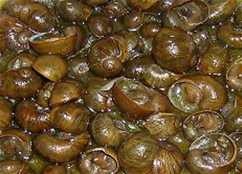 alimentazione lumache di terra 2015 s r l website prodotti