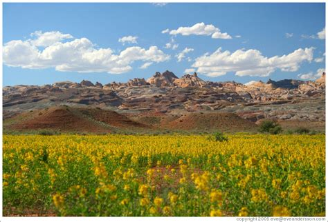 Yellow Landscape Pictures Scenic Photos Large Scenery Photos