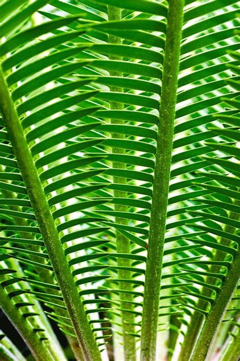 design from nature patterns in nature natures patterns pinterest