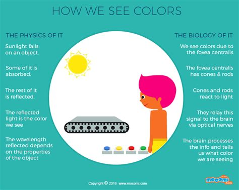 how do we see color gifographic for mocomi