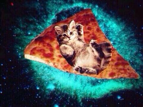 pizza kittens 74 best pizza cat images on pizza cat cats and baby kittens