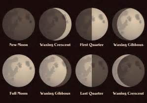 Moon phases vector download free vector art stock graphics amp images