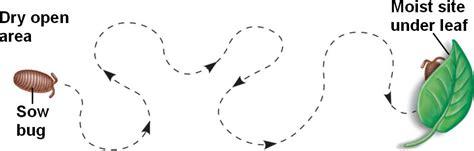 fixed action pattern definition biology พฤต กรรมส ตว animal behavior