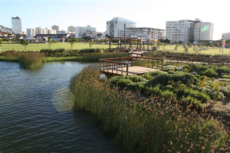 indigenous cape wetland section of the biodiversity showcase garden in cape town south africa