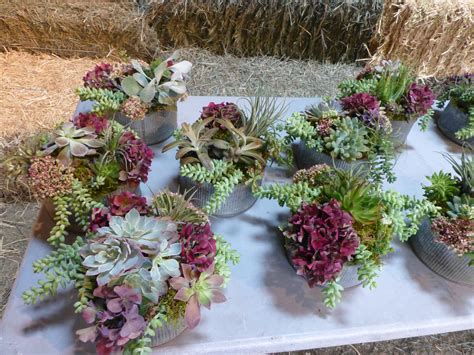 Succulent Airplant Wedding Centerpieces Late September Succulent Wedding Centerpiece