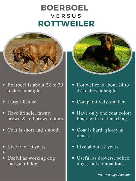 boerboel vs rottweiler difference between boerboel and rottweiler facts characteristics behavior