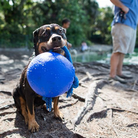 8 year rottweiler instagram sensation the dogist releases new photo book featuring 1 000 canines