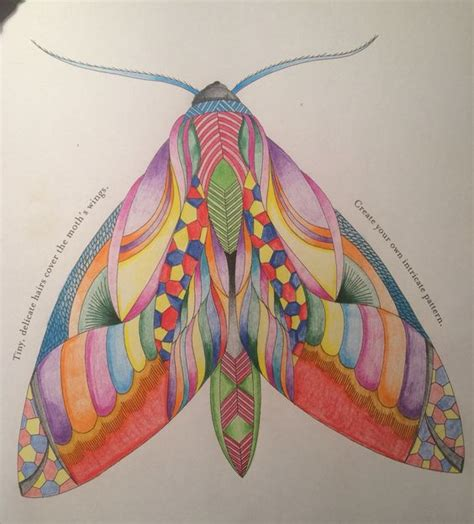 completed    moths  millie marotta animal