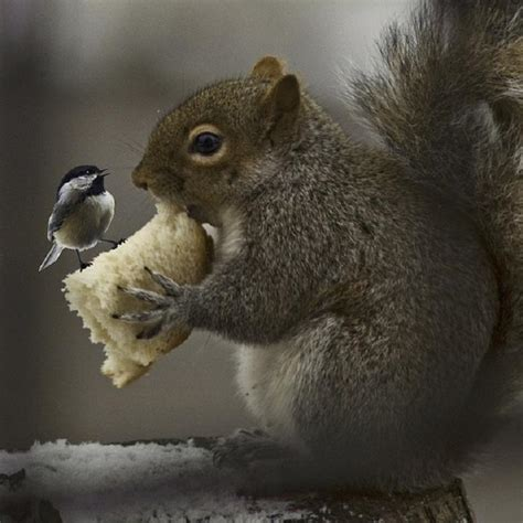 bird and squirrel sharing bread pixdaus