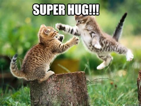 Cat Hug Meme - super hug cute kittens quickmeme