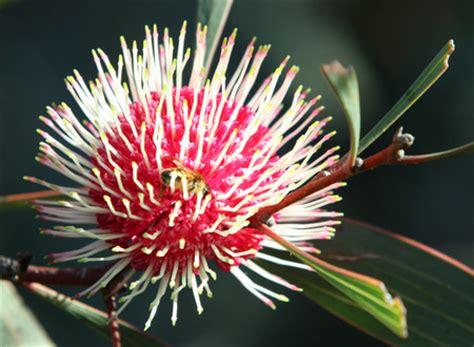 types of plants in a tropical rainforest australian plants search australian