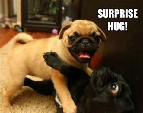 hug a pug day 2014