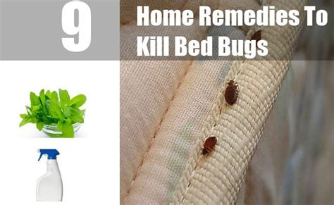 how do i kill bed bugs 9 home remedies to kill bed bugs natural treatments