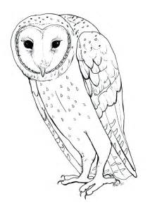 free coloring pages of random owl