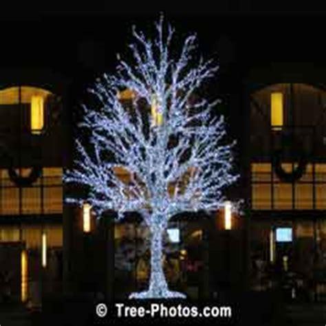 como pintar un pino natural seco kerstbomen plaatjes beelden en feiten op kerstmis