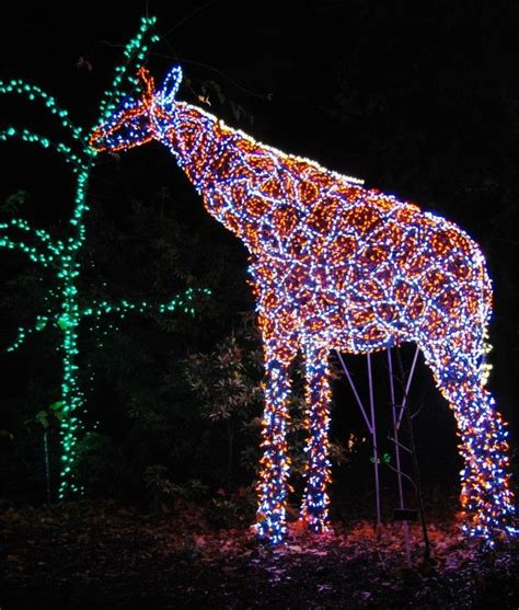 brookside gardens lights grazing giraffe at brookside gardens ᏟᎻᎡḭᏚᎢᎷᎪᏕ lights