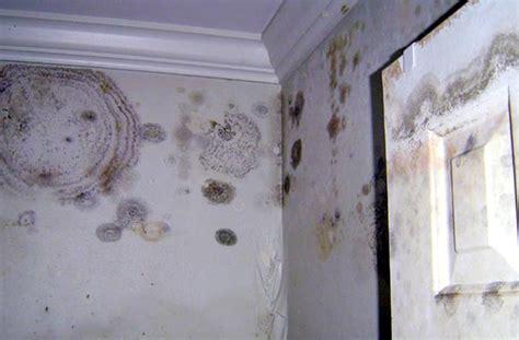 orange mold in bathroom mold in bathroom wall