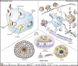 interaction of pattern recognition receptors with mycobacterium tuberculosis molecular determinants in phagocyte bacteria interactions