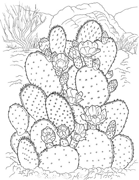 printable coloring pages free printable cactus coloring pages for