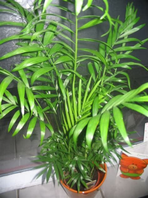 flowering house plants identification common tropical house plants identification flowering