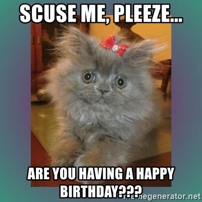 Cute Birthday Meme - happy birthday cute kitten memes