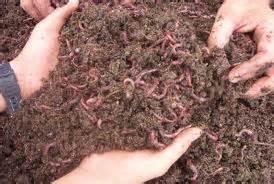 Rak Cacing tips budidaya cacing tanah juragancacing