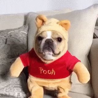 pooh gifs find share  giphy