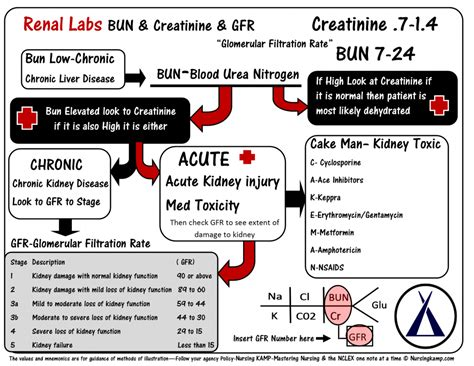 creatinine of 4 bun creatinine and the evaluation of renal functioning