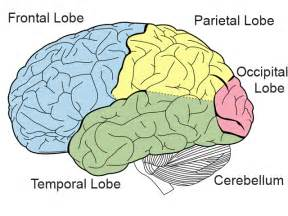 Know your brain structure