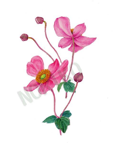 anemone japonica japanese anemone botanical art