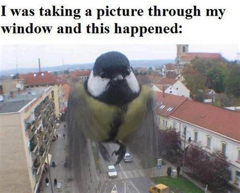 Funny Bird Memes - funny photobomb