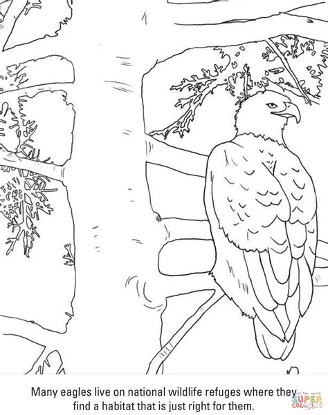 martial eagle coloring pages bald eagle coloring page free printable coloring pages