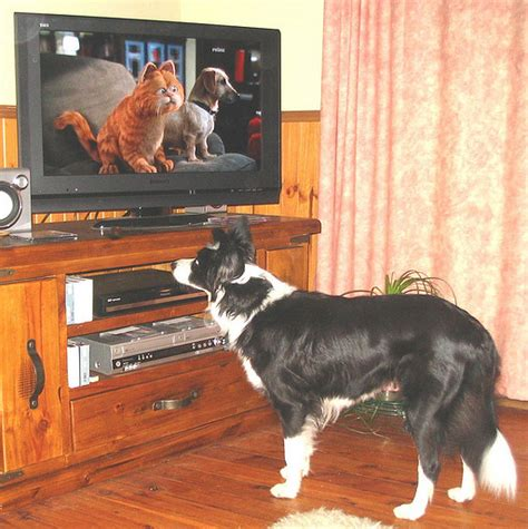 can dogs tv can dogs tv here s the real story