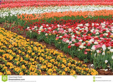 Flower Garden City Expo Flower Garden Stock Photo Image Of Vibrant Jinzhou 31180094