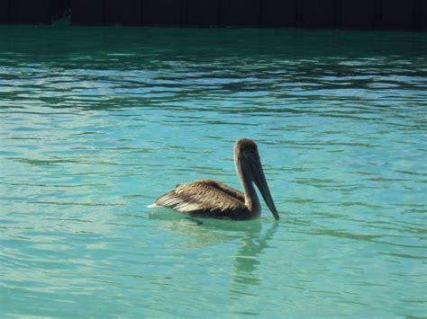 pelican boat curacao pelican boat trips curacao leisure curacao