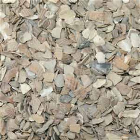 28 best where to buy crushed oyster shells eggs shells for chickens oyster shell replacement