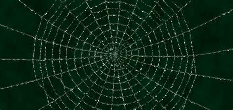 www web spiderweb www pixshark com images galleries with a bite