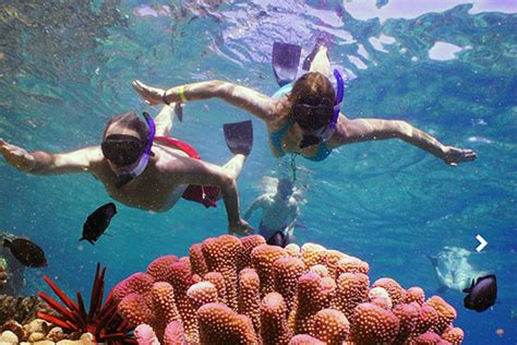 big island catamaran snorkel kona snorkeling tour brilliant reef paddle boards and fun