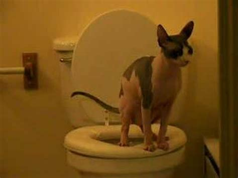 why does my cat poop in the bathtub i trained my cat to poop in the toilet doovi
